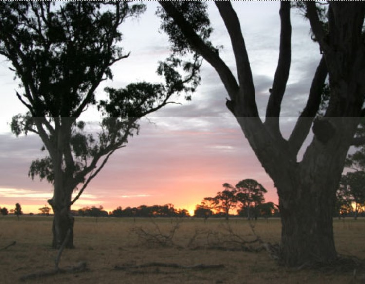 View of a South Australian sunset through the trees.